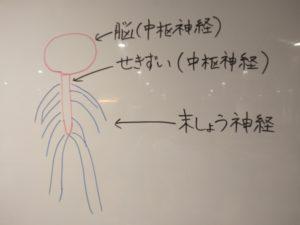 頭皮マッサージは自律神経にも効果がある?グッズ不要のやり方を紹介!
